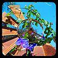 JBergmann_Windmill_Flower